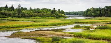 Humedales pueden sustituir plantas de tratamiento de aguas sucias (Contra Linea)