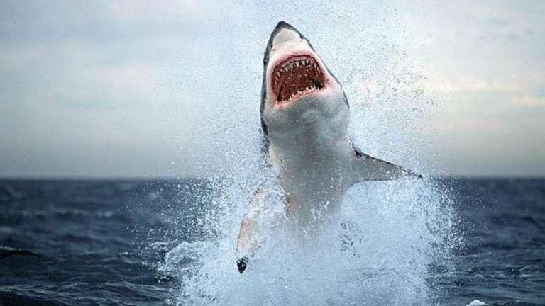"""Sudáfrica: ¡Impresionante! Tiburón es fotografiado """"volando"""" sobre el agua tras salto de varios metros (El Heraldo de México)"""