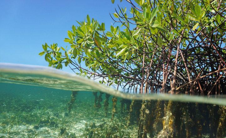 Fuerte margen de mejora para transparentar la gestión gubernamental de los recursos forestales, hídricos y pesqueros
