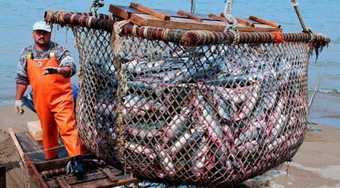 Transparencia en recursos forestales y pesqueros debe mejorar (AM Querétaro)