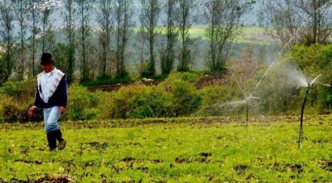 Diseño de riego tecnificado gratuito para el sector agrícola (La Hora)