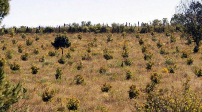 Freseros y aguacateros dejan sin agua a comunidades del sur de Morelia (La Voz de Michoacán)