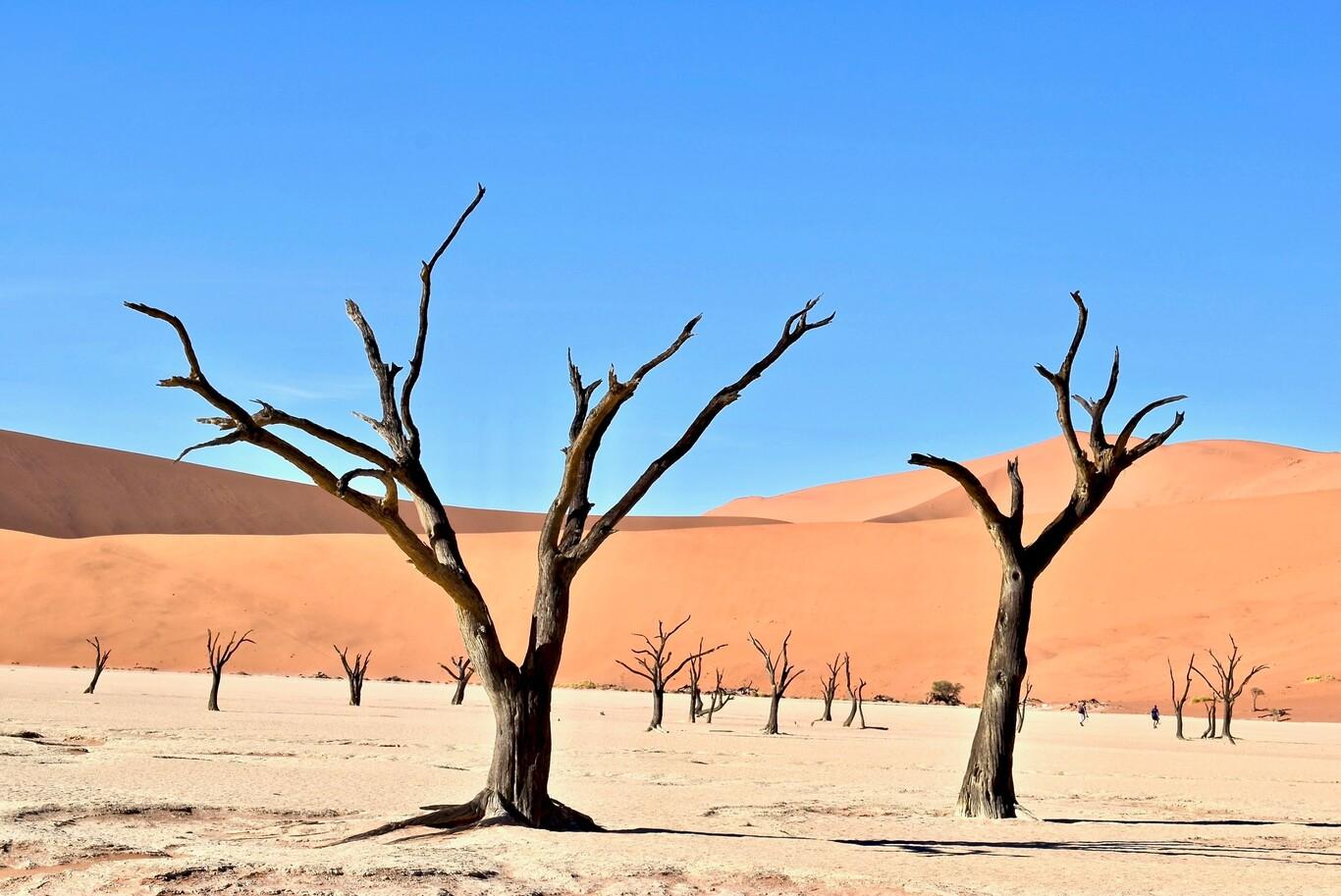 El sueño de extraer agua en el desierto con la única ayuda del sol empieza a convertirse en tecnología útil y accesible (Xataka)