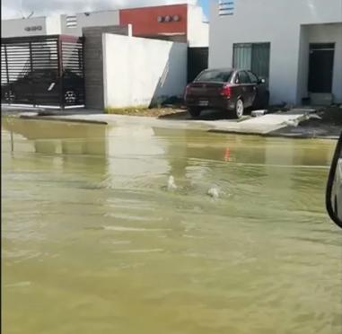 Yucatán: Tras paso de huracán en Mérida, brota agua de alcantarillas y deja inundaciones (El Universal)