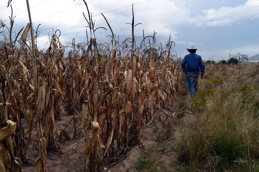 Empresas acaparan el agua afectando a cientos de campesinos en Puebla (ladobe)