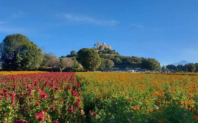 Puebla: En incertidumbre viven productores de flor de cempasúchil en Puebla. (El Sol de Puebla)