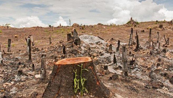 Detener pérdida ambiental es 100 veces más barato que recuperarse de una pandemia (El Espectador)
