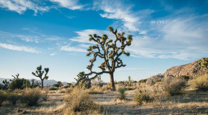 Tras 15 años de sequía, ejidos podrían desaparecer (El Sol del Parral)