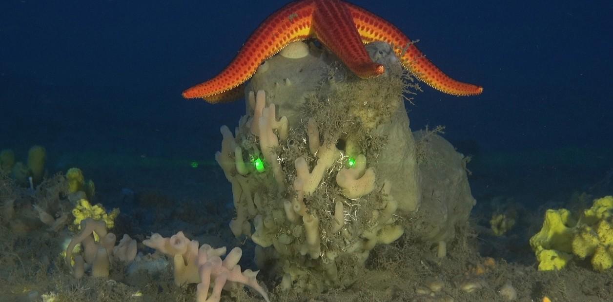 (Mar Mediterráneo) El calentamiento del agua hace desaparecer las esponjas del mar Mediterráneo (Clarin Internacional)