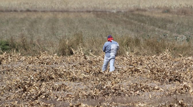 Escasez de agua en Puebla causa cambios drásticos de temperatura (Milenio)