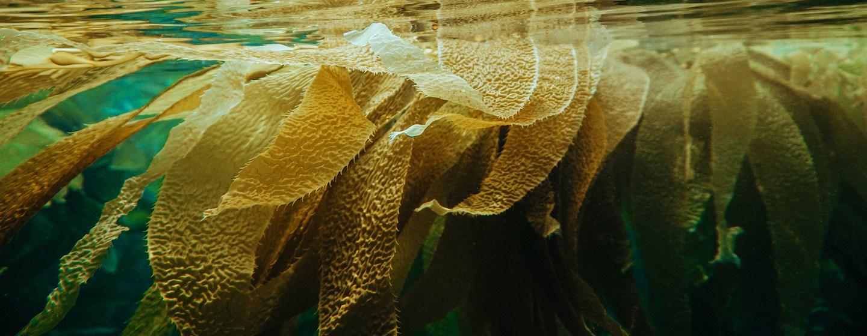 ¿Son las algas marinas la solución definitiva para acabar con el hambre y reducir el cambio climático?(Noticias ONU)