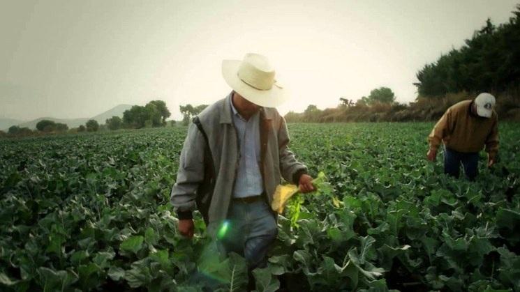 Políticas de fomento a la agricultura sustentable son positivas: Sader (La Jornada)