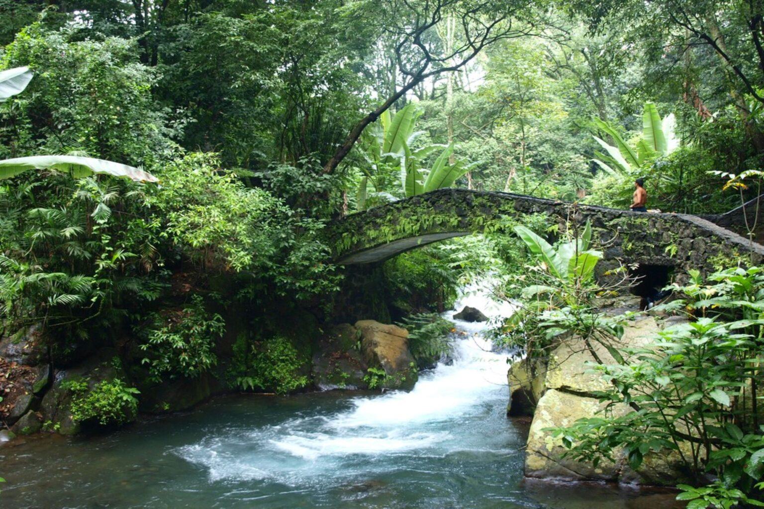 Opinión: Una recuperación verde para AL tras la pandemia (El Universal)