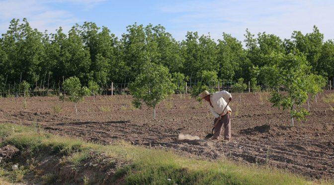 Crean app para mejorar cultivos y ahorrar agua hasta en un 37% (MILENIO)