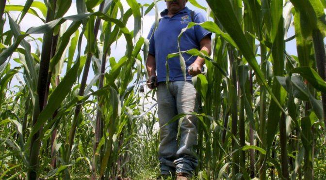 Agua tratada es segura para el riego de cultivos: CAEM (MILENIO)