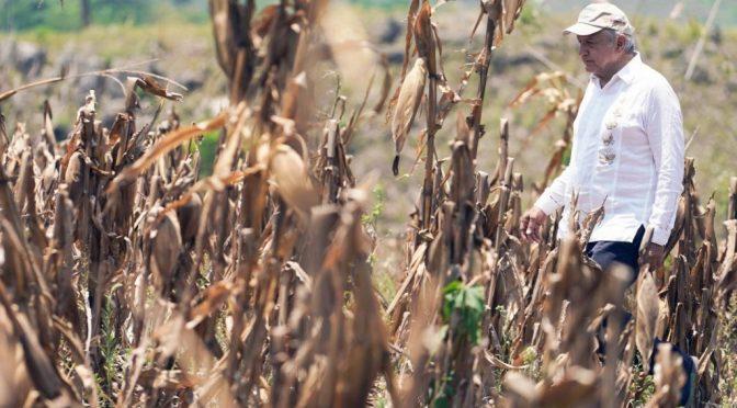 (México)A 2 años de la 4T, ¿qué atención reciben los problemas ambientales? (Aristegui Noticias)