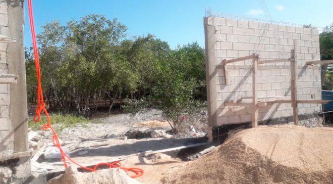 Quintana Roo: Delito ambiental: vecinos denuncian tala de mangle en Holbox (sipse.com)