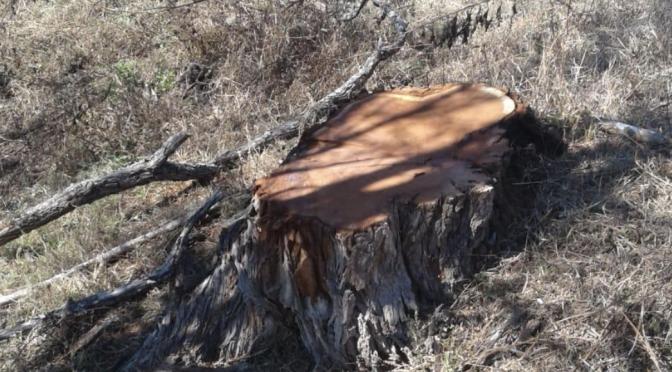 Más enfermedades por deforestación, cambio climático y agua contaminada (El Universal)