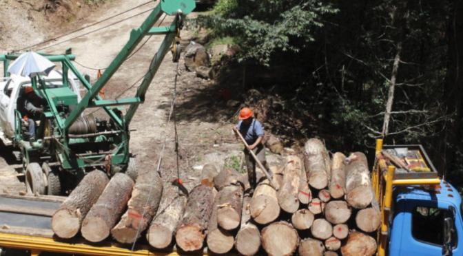 Las deudas ambientales de México en el 2020: defensores asesinados, menos presupuesto para medioambiente y el impacto de la pandemia (Mongabay)