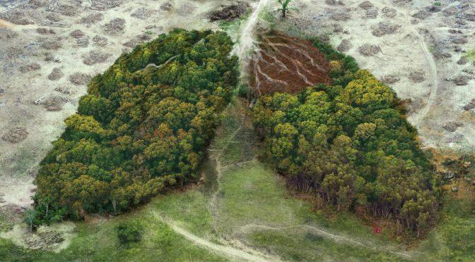 Afirman que el 70% de los últimos brotes epidémicos surgieron con la deforestación (BIOGUIA)
