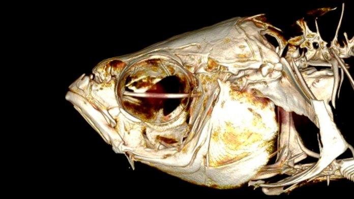 México ha perdido 12 peces de agua dulce.- WWF (lucesdelsiglo.com)