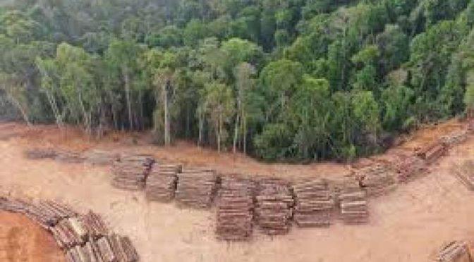 México entre los primeros lugares de deforestación  (Ciudadanía Express)