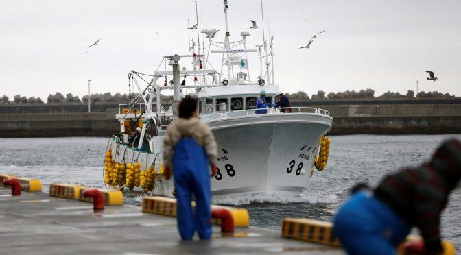 Japón: Detectan por primera vez en dos años un exceso de un elemento radioactivo en pescado cerca de Fukushima (actualidad.rt.com)