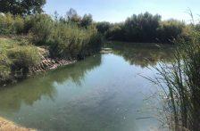 CHH: Sostiene la Conagua que están asegurados el abasto de agua para riego y la atención a trámites ingresados en la dirección local de Chihuahua tras despido masivo de ayer (El Puntero)