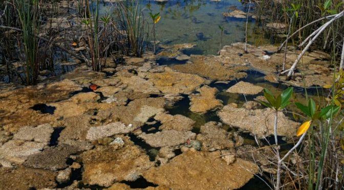 Quintana Roo: Preocupa exceso de sedimento en laguna de Bacalar; 'algo está mal': activistas (La Jornada)