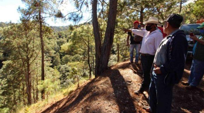 Guerrero: Exigen cancelar permisos a empresas taladoras del bosque en Chilpancingo (Bajo Palabra Noticias)