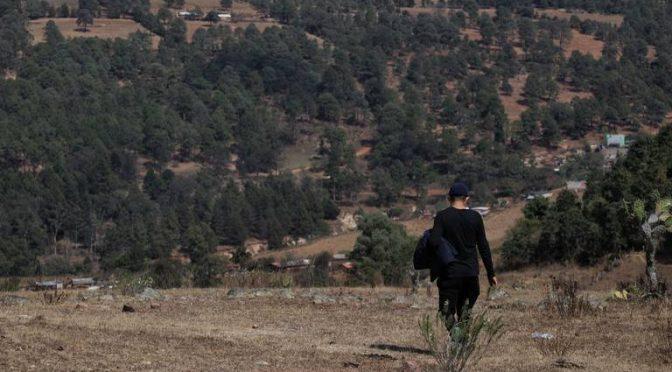 Devastados, 70% de los bosques en el sur de Morelia (El Sol de Zamora)