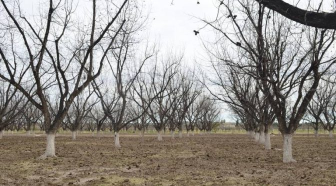 Chihuahua: Piden compensación para agricultores por falta de agua (El Heraldo de Chihuahua)