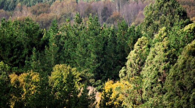 Aumentar la biodiversidad de los bosques hará que resistan al cambio climático (Portal Ambiental)