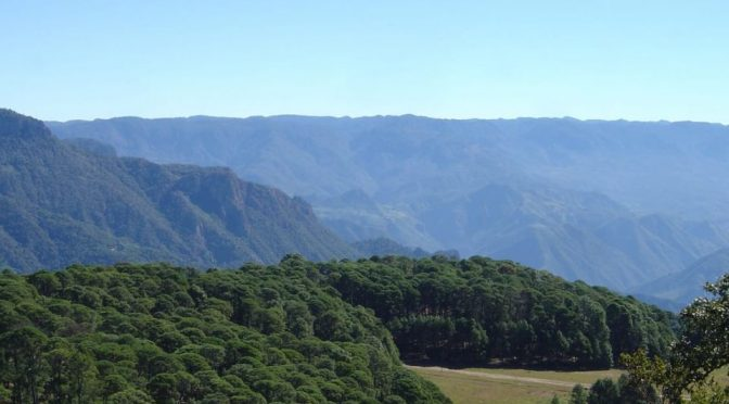 México: Aprueban reformas a leyes de Equilibrio Ecológico y Desarrollo Forestal (Portal ambiental)