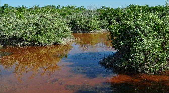 San Luis Potosí: Conagua trabaja para asegurar que el agua de los humedales beneficie a todos (El Exprés)