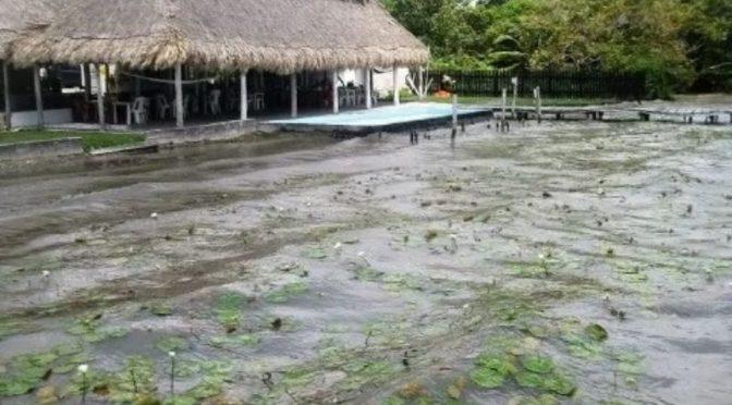 Quintana Roo: Piden firmar petición para salvar a la Laguna de Bacalar de 'ecocidio' (PorEsto!)