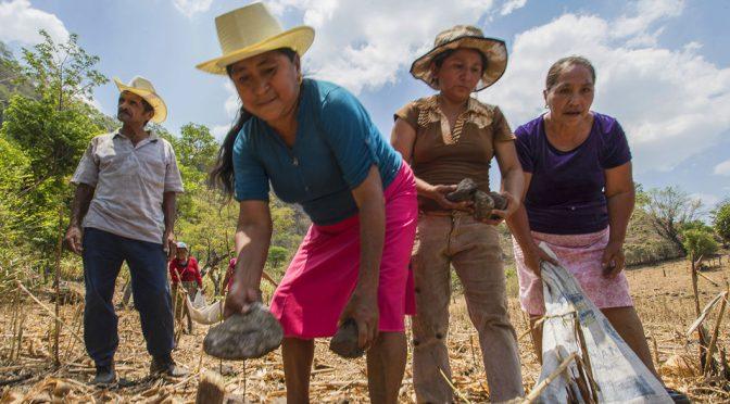 El clima y el COVID-19 cuadriplican el número de centroamericanos que pasan hambre (Noticias ONU)