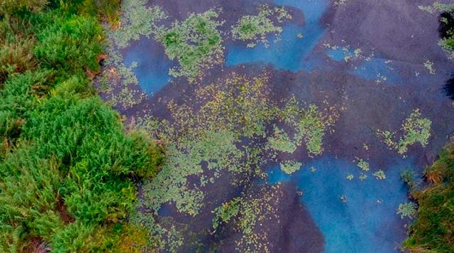 Michoacán, con 9 humedales; preocupa que escasez de agua los acabe (Mimorelia.com)