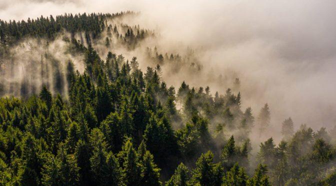 Madrid: Agua de niebla para repoblar áreas desertificadas (El Ágora)