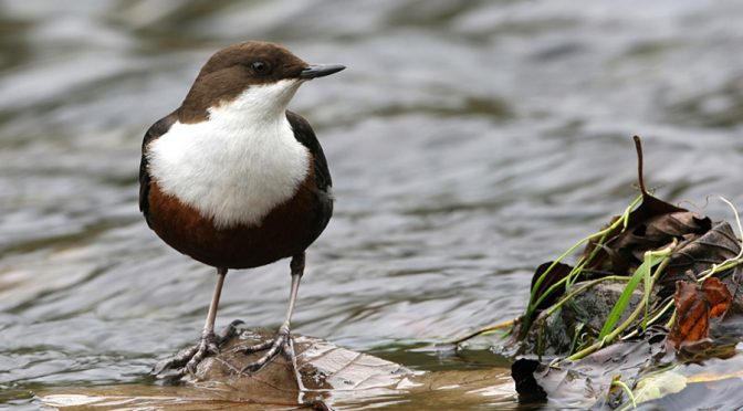 La biodiversidad invisible que mantiene a peces y aves carismáticas en los ríos (Ecomandanga)