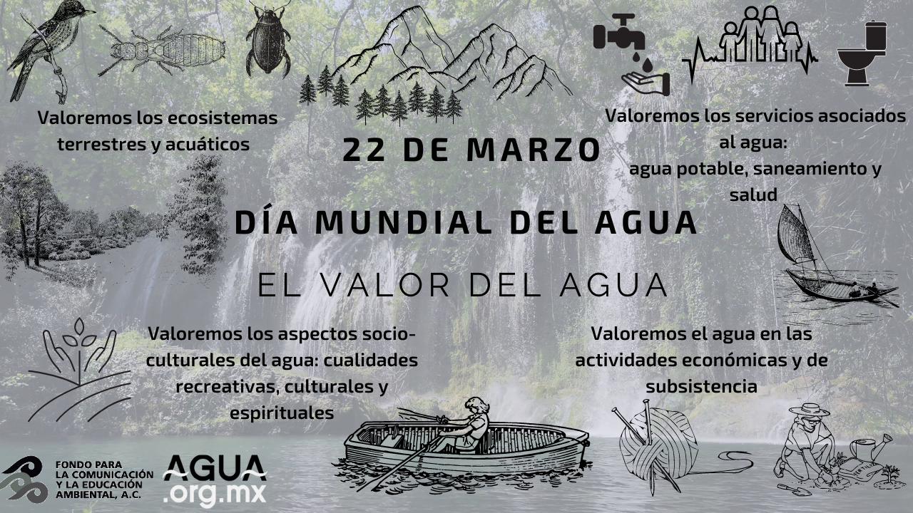 Reflexiones sobre el Día Mundial del Agua: el valor del agua