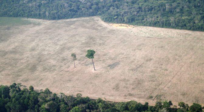 Un estudio revela que el ser humano ha destruido o degradado dos tercios de las selvas tropicales del planeta (actualidad.rt.com)