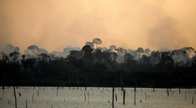 Los bosques del Amazonas, de 'pulmón del planeta' a fuente de calentamiento global (actualidad.rt.com)