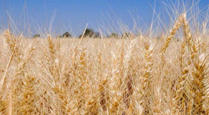 Sonora: Incertidumbre de agua en presas preocupa al sector agropecuario (EXPRESO)
