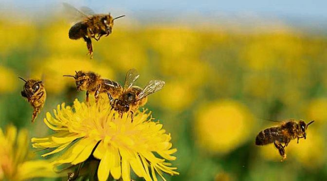 BeeLetter, un boletín de noticias sobre medio ambiente con éxito (La Vanguardia)