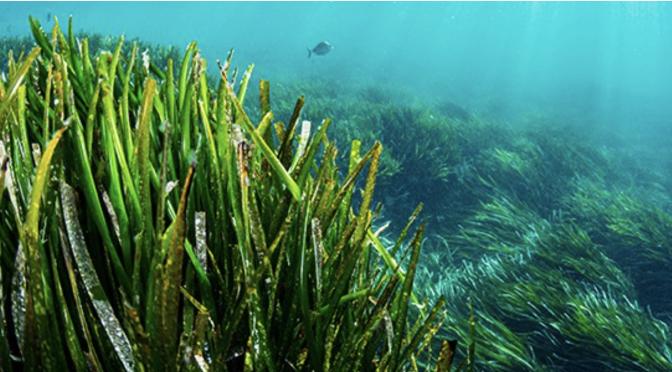 Un nuevo estudio demuestra el papel crucial de los sitios marinos del Patrimonio Mundial en la lucha contra el cambio climático (UNESCO)