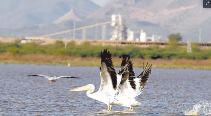 Sonora: Agua, el desafío para una gran ciudad (EL IMPARCIAL)