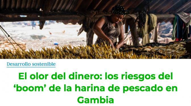 Gambia: El olor del dinero: los riesgos del 'boom' de la harina de pescado en Gambia (el Ágora)
