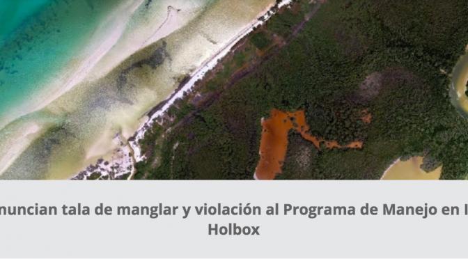 Denuncian tala de manglar y violación al Programa de Manejo en Isla Holbox (CEMDA)