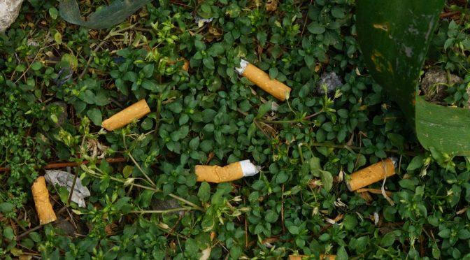 México desecha cada año 50 mil millones de colillas de cigarro. Empresa alista planta tratadora (Sin Embargo